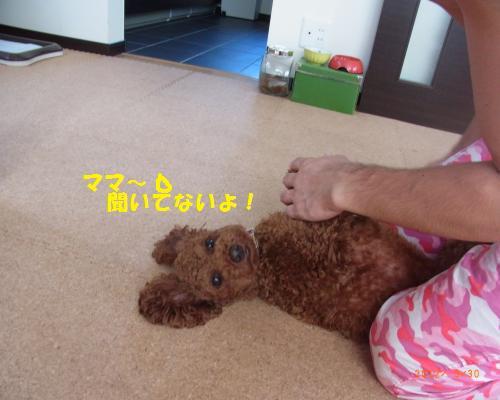 043_convert_20120930213141.jpg