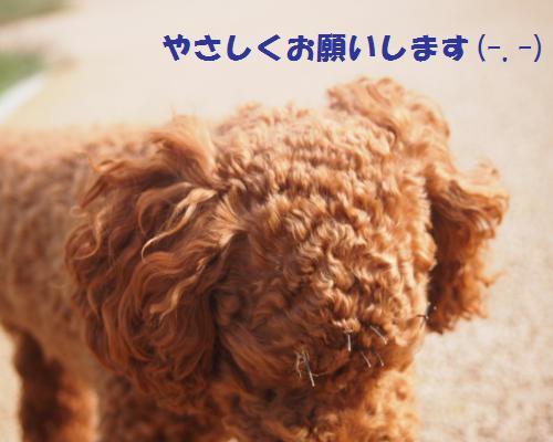 043_convert_20121104091927.jpg