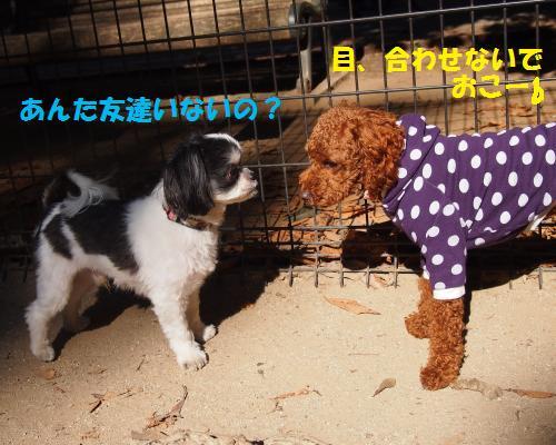 043_convert_20121106212443.jpg