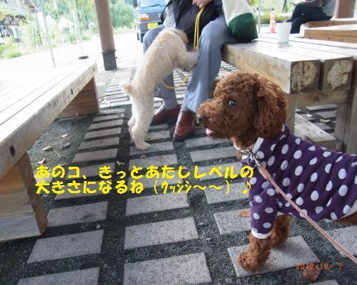 044_convert_20121007211617.jpg
