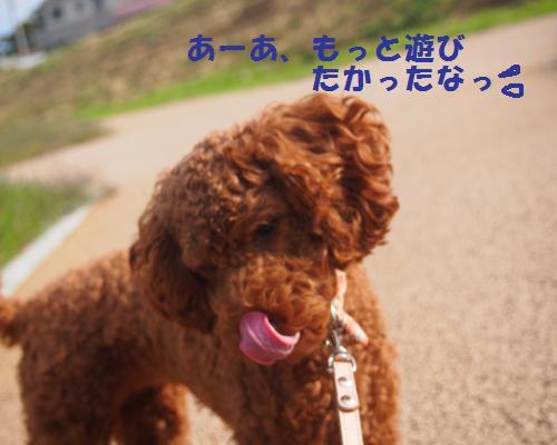 045_convert_20121104232308.jpg