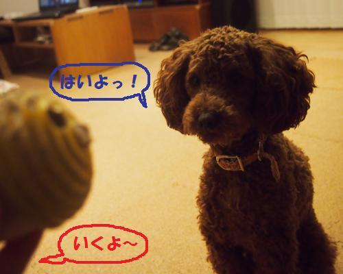 046_convert_20121128003056.jpg