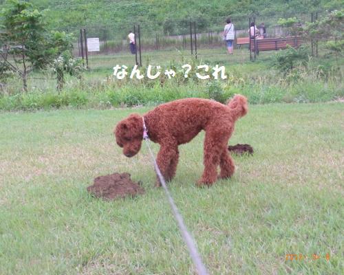 048_convert_20120910001427.jpg