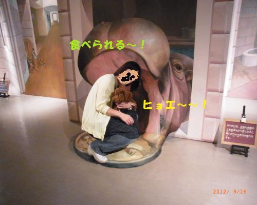 050_convert_20120917132245_convert_20120917145047.jpg