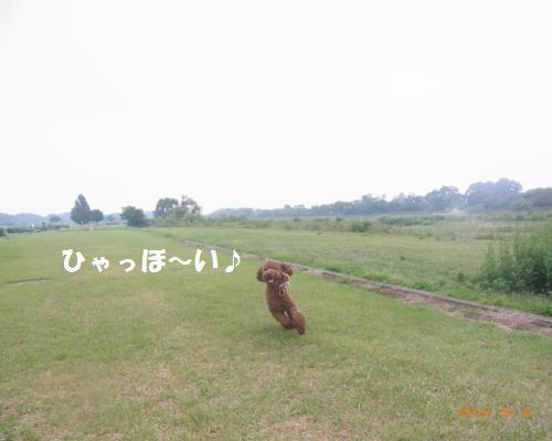 056_convert_20120910001707.jpg
