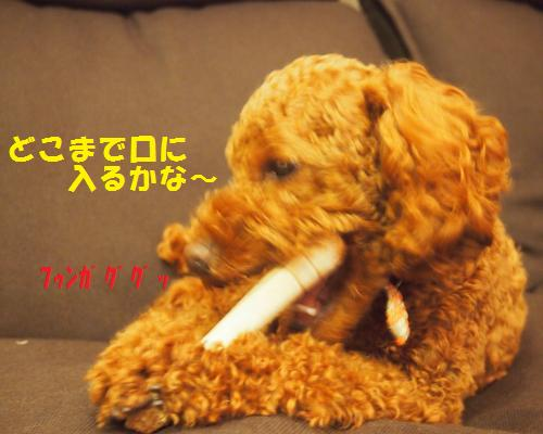 056_convert_20121204221315.jpg