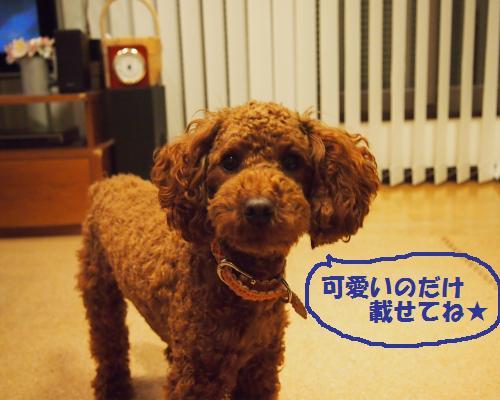 057_convert_20121121015557.jpg