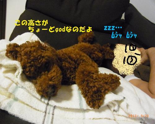 060_convert_20120925222059.jpg