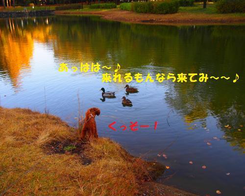060_convert_20121118215507.jpg