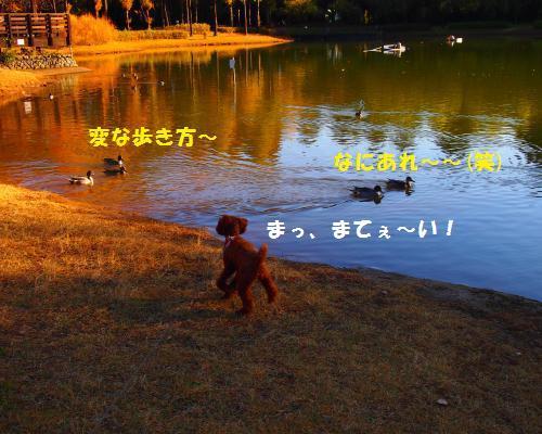 064_convert_20121118215551.jpg