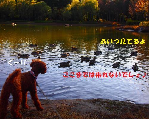 068_convert_20121118215730.jpg