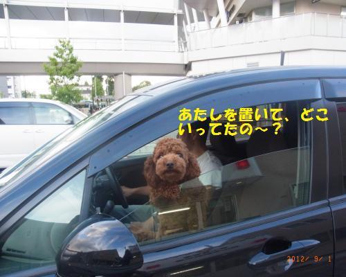 070_convert_20120902024856.jpg