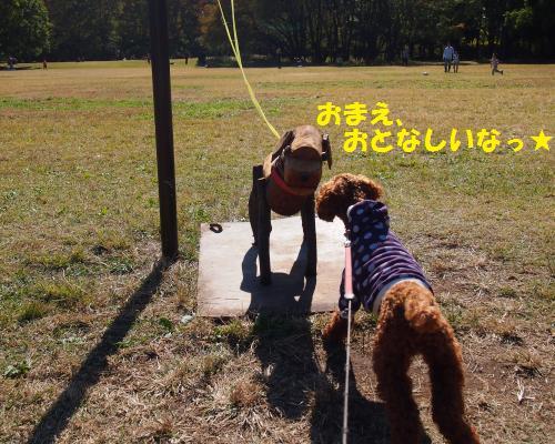 071_convert_20121106212849.jpg