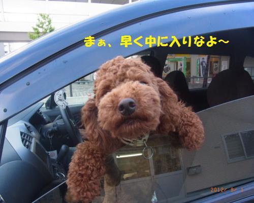 072_convert_20120902025121.jpg