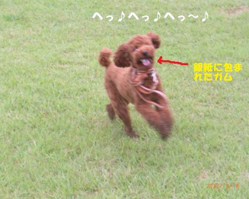 074_convert_20120910002108.jpg
