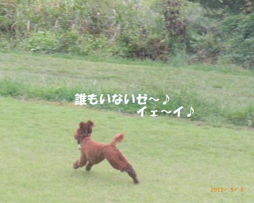 077_convert_20120910002238.jpg