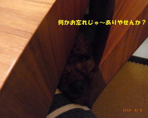 078_convert_20120808232124.jpg