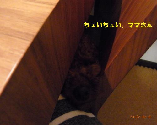 079_convert_20120808231949.jpg