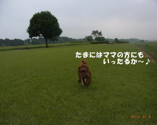080_convert_20120910002333.jpg