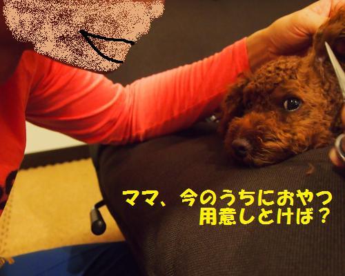 080_convert_20121028083209.jpg