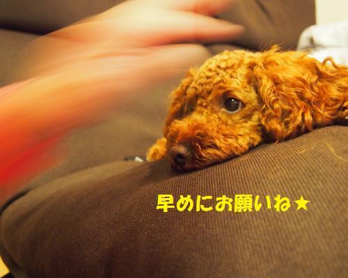 082_convert_20121028083320.jpg