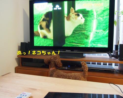 084_convert_20121124195024.jpg