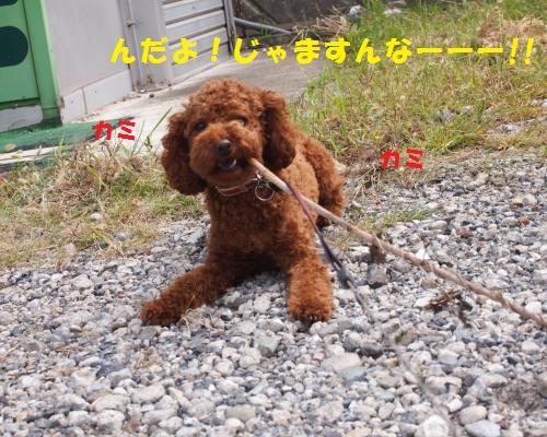 085_convert_20121017011913.jpg