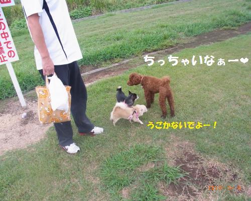 087_convert_20120910002459.jpg