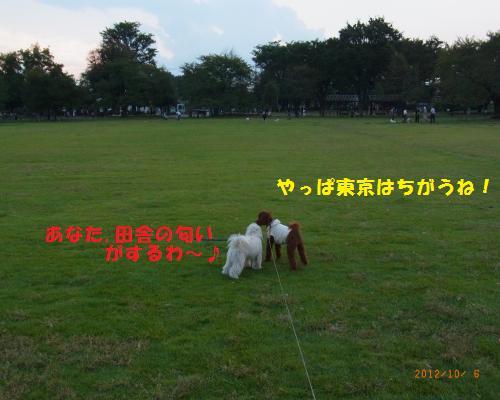 087_convert_20121006222706.jpg