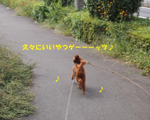 087_convert_20121017011712.jpg