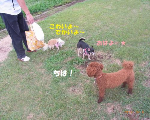 088_convert_20120910002541.jpg