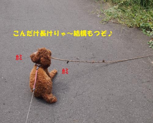 088_convert_20121017011813.jpg