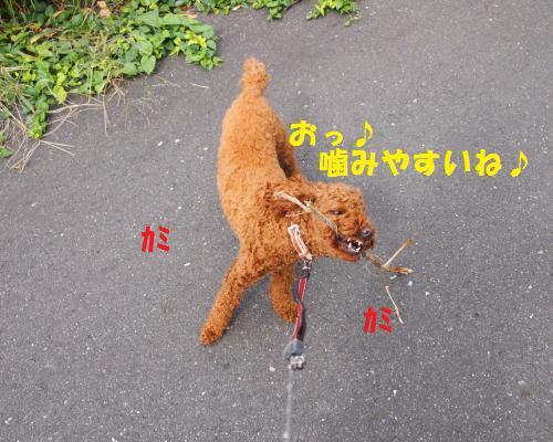 089_convert_20121017012233.jpg