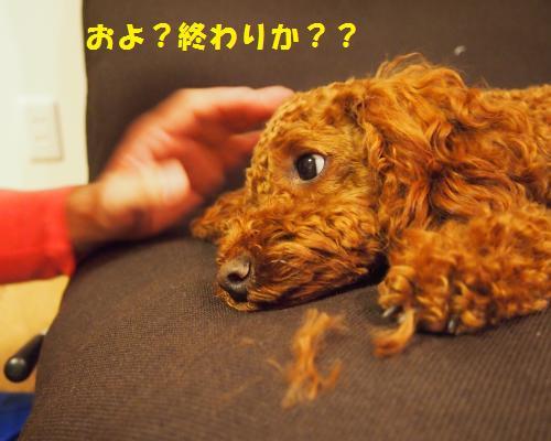 091_convert_20121028083648.jpg