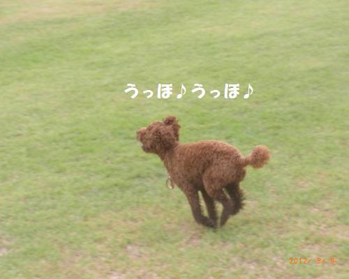 102_convert_20120910002738.jpg