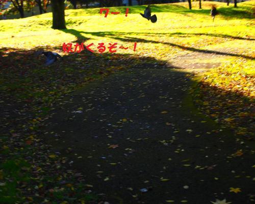 105_convert_20121118220017.jpg