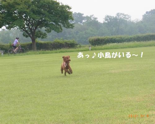 106_convert_20120910002854.jpg