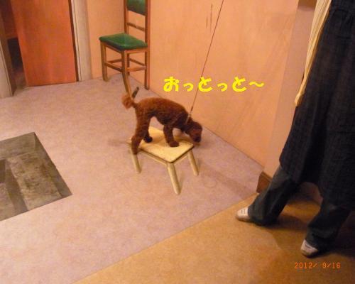 106_convert_20120917133716.jpg