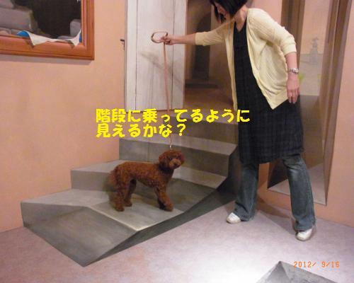 108_convert_20120917133750.jpg