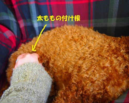 110_convert_20130210200524.jpg