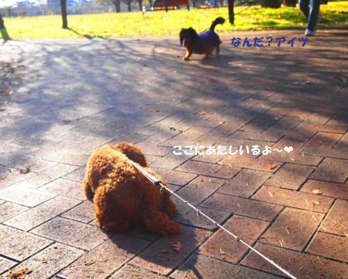 112_convert_20121130005927.jpg