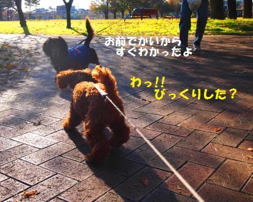113_convert_20121130010011.jpg