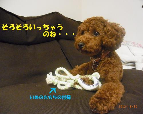 118_convert_20120901010304.jpg