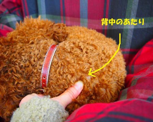 118_convert_20130210200759.jpg