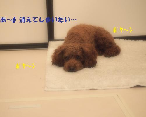 126_convert_20121111225023.jpg