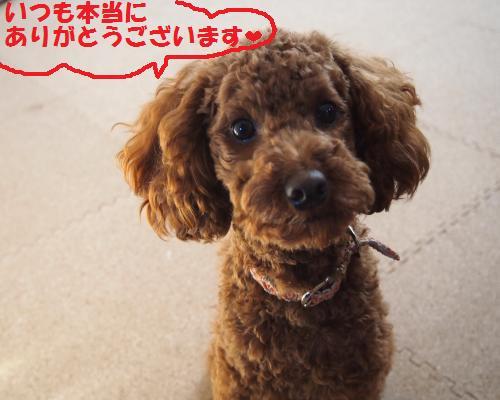130_convert_20121208105912.jpg
