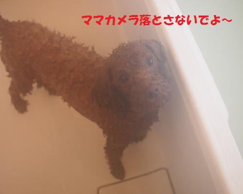 133_convert_20121111225328.jpg