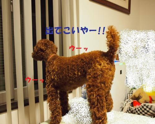 134_convert_20121014223712.jpg