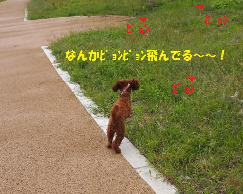 138_convert_20121018205617.jpg