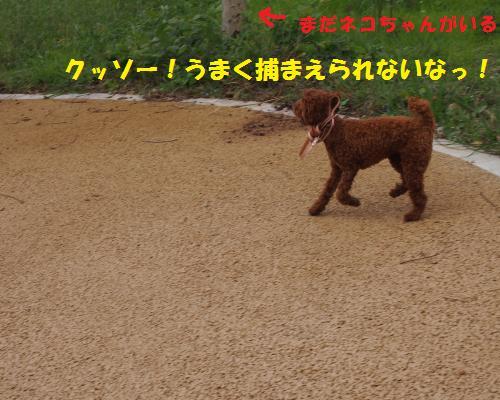 140_convert_20121018205727.jpg